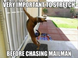 Even animals stretch before running!